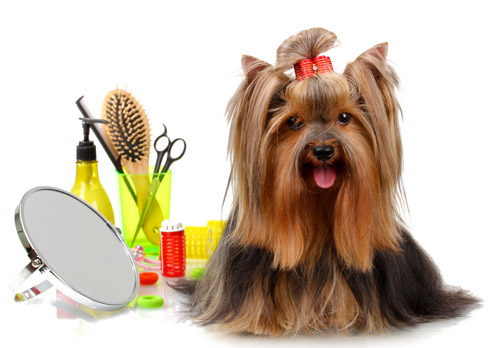 Le York Pet Grooming About Us